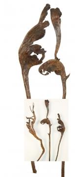 Natraj Zweig Medium Natur lackiert (500 Stück)