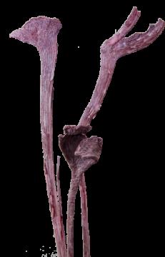 Natraj Zweig Large in Frosted Pink Erika (500 Stück)