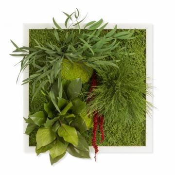 Moosbild  Typ Pflanze, 35x35 cm mit weißem Tischlerrahmen