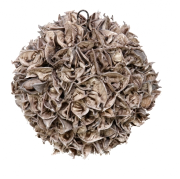 Baumwollfruchtkugel gewachst in Mocca Grey ( Ø 14cm ) (6 Stück)