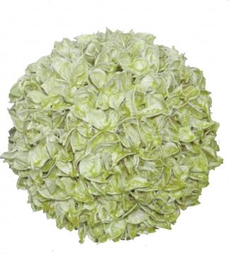 Baumwollfruchtkugel 14cm gew. grün light