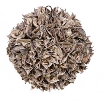 Baumwollfruchtkugel gewachst in Mocca Grey ( Ø 18cm ) (6 St