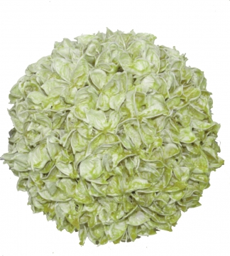 Baumwollfruchtkugel 18cm gew. grün light