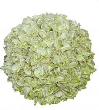 Baumwollfrucht Kugel Ø 22cm gewachst in Grün Light
