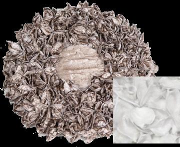 Baumwollfrucht Kreis gewachst in Creme Weiß (Ø25cm)