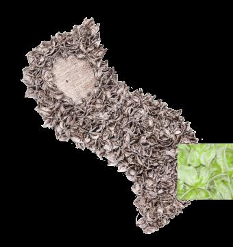 Baumwollfrucht Schweif gewachst in Grün Light ( ca. 40cm ) (6 Stück)