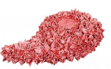 Baumwollfrucht Engelsflügel gewachst Rot Antik ( ca. 40cm ) (6 Stück)