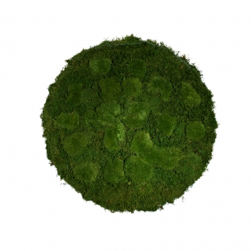Moos•Moos Moosbild rund aus `Ballenmoos´ Ø 70cm präpariert in Moosgrün mit Edelstahlrahmen