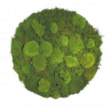 Moos•Moos Moosbild rund aus `Ballenmoos und Grünmoos´ Ø 70cm präpariert in Apfelgrün mit Edelstahlrahmen