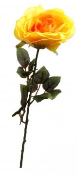Samtrose groß gelb (12 Stück)