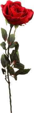 Samtrose groß rot (12 Stück)