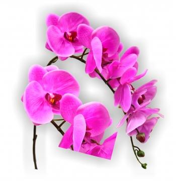 Orchideen Zweig gummiert in lila Länge 65cm       (12 St