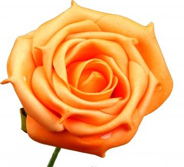 Schaumrose groß 8cm mit Stiel orange (Btl. mit 24 Stück) (12 Stück)