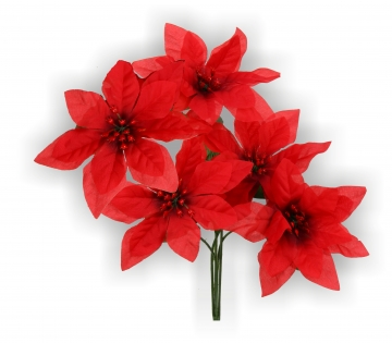 Poinsettia Busch (36 Stück)