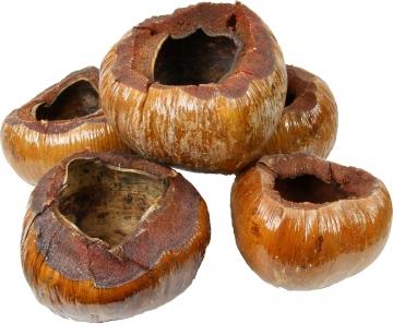 Kokostopf in Natur lackiert [Ø 12-16cm, Öffnung Ø 5-8cm]   (16 Stück)