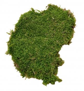 Plattenmoos grün (5 Stück)