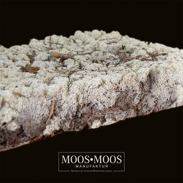 Moos•Moos Finnischmoos Natur getrocknet ( 2 Lage - 40 x 60cm )