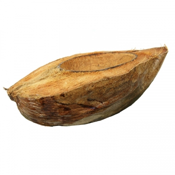 Kokosnuss halbiert lackiert ( ca. Ø 23 x 14cm, Öffnung Ø 8-10cm ) (16 Stück)