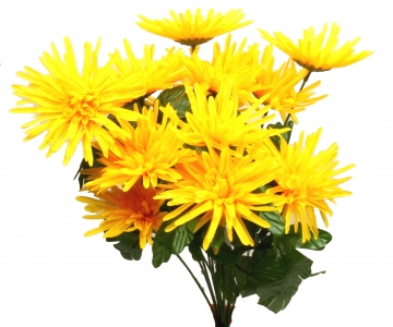 Strahlenchrysanthemen-Strauß gelb (12 Stück)