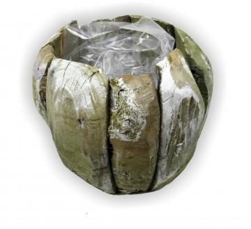 Wurzelholz Topf ca. 25cm frosted oliv (4 Stück)
