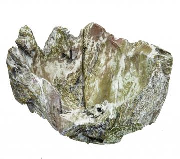 Wurzelholz Schale Rustika klein ca. 30cm frosted oliv (4 Stück)