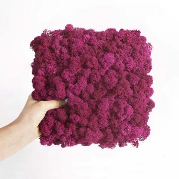 "Moosbild ""Amalia"" Islandmoos in Pink 25x25cm"