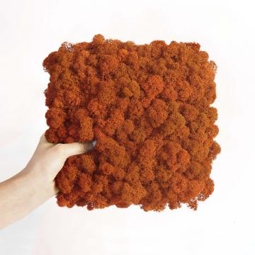 Moos•Moos Islandmoos Organic Moosbild ´Amalia´ in Mandarine – Moosplatte ( 25x25cm ) – einzigartiges Gefühl trifft auf besonderes haptisches Gefühl