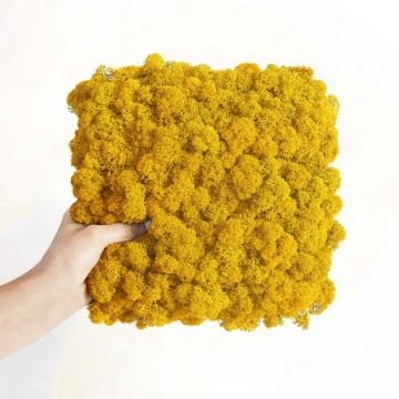 Moos•Moos Islandmoos Organic Moosbild ´Amalia´ in Sonnengelb – Moosplatte (25x25cm) – einzigartiges Gefühl trifft auf besonderes haptisches Gefühl