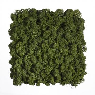 Moos•Moos Islandmoos Organic Moosbild ´Amalia´ (25x25cm) in Moosgrün – Moosplatte – einzigartiges Gefühl trifft auf besonderes haptisches Gefühl