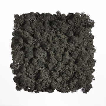 Moos•Moos Islandmoos Organic Moosbild ´Amalia´ (25x25cm) in Persergrau – Moosplatte – einzigartiges Gefühl trifft auf besonderes haptisches Gefühl