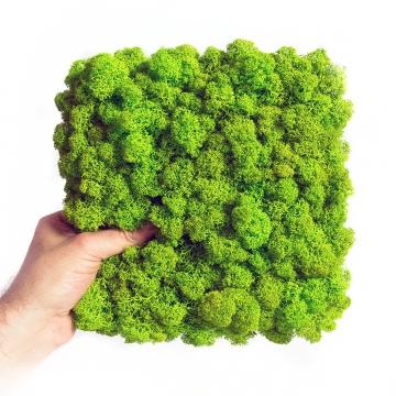 Moos•Moos Islandmoos Organic Moosbild ´Amalia´ (25x25cm) in Apfelgrün – Moosplatte – einzigartiges Gefühl trifft auf besonderes haptisches Gefühl