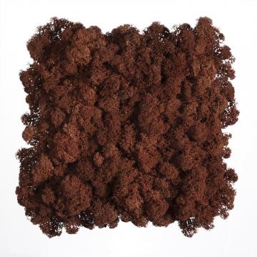Moos•Moos Islandmoos Organic Moosbild ´Amalia´ (25x25cm) in Wurzelbraun – Moosplatte – einzigartiges Gefühl trifft auf besonderes haptisches Gefühl