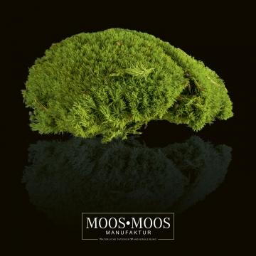 Moos•Moos Ballenmoos präpariert und gefärbt in Apfelgrün ( 1 Kiste - ca. 0,24 m² )