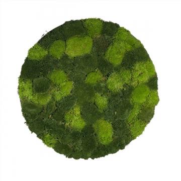 Moos•Moos Moosbild rund aus `Ballenmoos´ Ø 70cm präpariert im Grün Mix mit Edelstahlrahmen