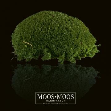 Moos•Moos Ballenmoos präpariert und gefärbt in Moosgrün ( 1 Kiste - ca. 0,24 m² )