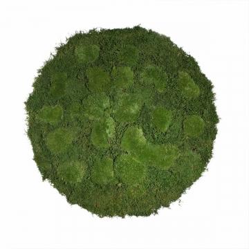 Moos•Moos Moosbild rund aus `Ballenmoos und Grünmoos´ Ø 70cm präpariert in Moosgrün mit Edelstahlrahmen