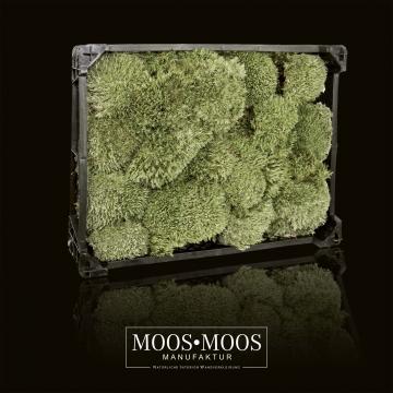 Moos•Moos Ballenmoos / Buckelmoos / Polstermoos unbehandelt Natur in einer ( Kiste 40 x 30 x 12 cm - ca. 0,24m² )