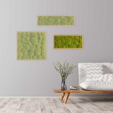 Moosbild Kugelmoos 57 x 27 cm mit Tischlerrahmen aus geölter Eiche