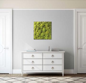 Moos•Moos Ballenmoosbild Large mit Ballenmoos präpariert in Apfelgrün mit schwarzem Rahmen ( 63 x 63cm )
