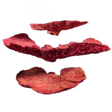 Baumschwamm lose in Rot gefärbt    (10 Kg)