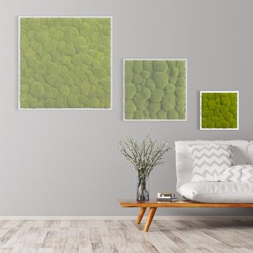 Moosbild Kugelmoos 35 x 35 cm mit weißem Tischlerrahmen