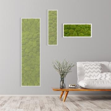 Moosbild Kugelmoos 57 x 27 cm mit weißem Tischlerrahmen -