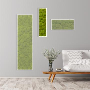 Moosbild Kugelmoos 70 x 20 cm mit weißem Tischlerrahmen