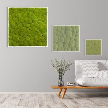 Moosbild Kugelmoos 80 x 80 cm mit weißem Tischlerrahmen