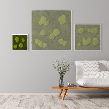 Moosbild Waldmoos & Kugelmoos 35 x 35 cm mit weißem Tischlerrahmen