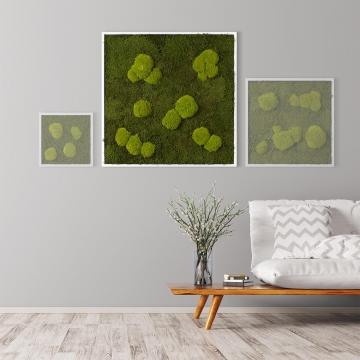 Moosbild Waldmoos & Kugelmoos 80 x 80 cm mit weißem Tischlerrahmen