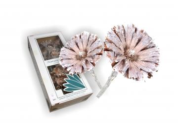 Protea geschnitten medium in Stonewashed (40 Stück)