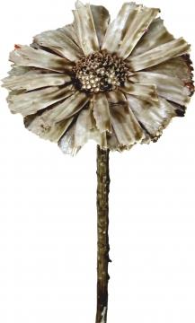 Protea geschnitten gewachst mocca grey (40 Stück)