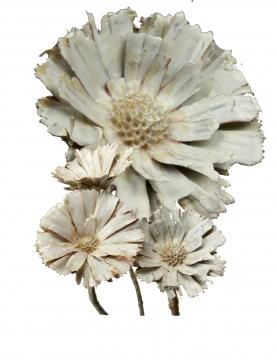 Protea geschnitten gewachst creme weiß (40 Stück)