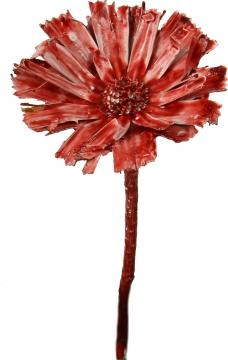 Protea geschnitten gewachst rot antik (40 Stück)